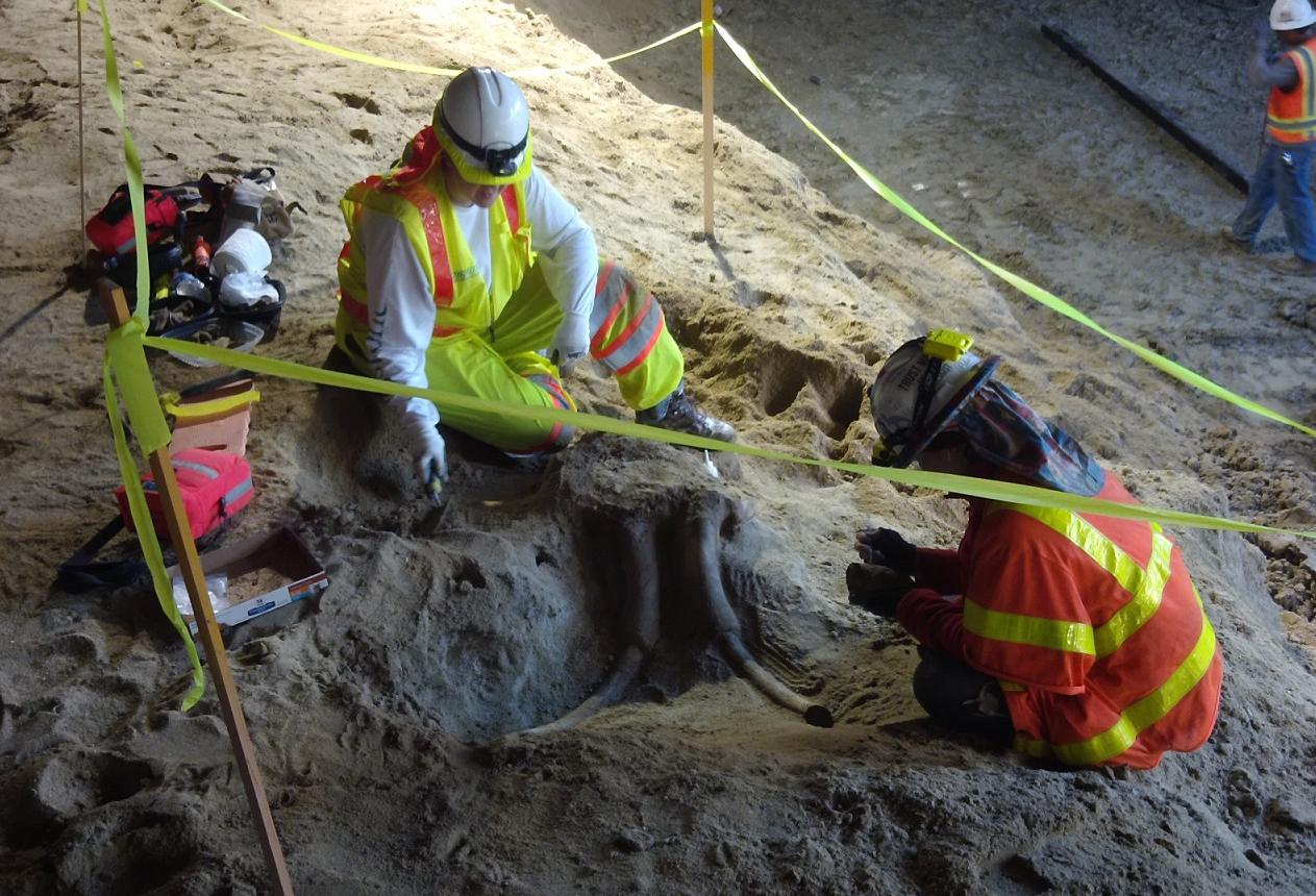 Hallan fósiles de mamut y mastodonte en unas obras en el metro de Los Ángeles