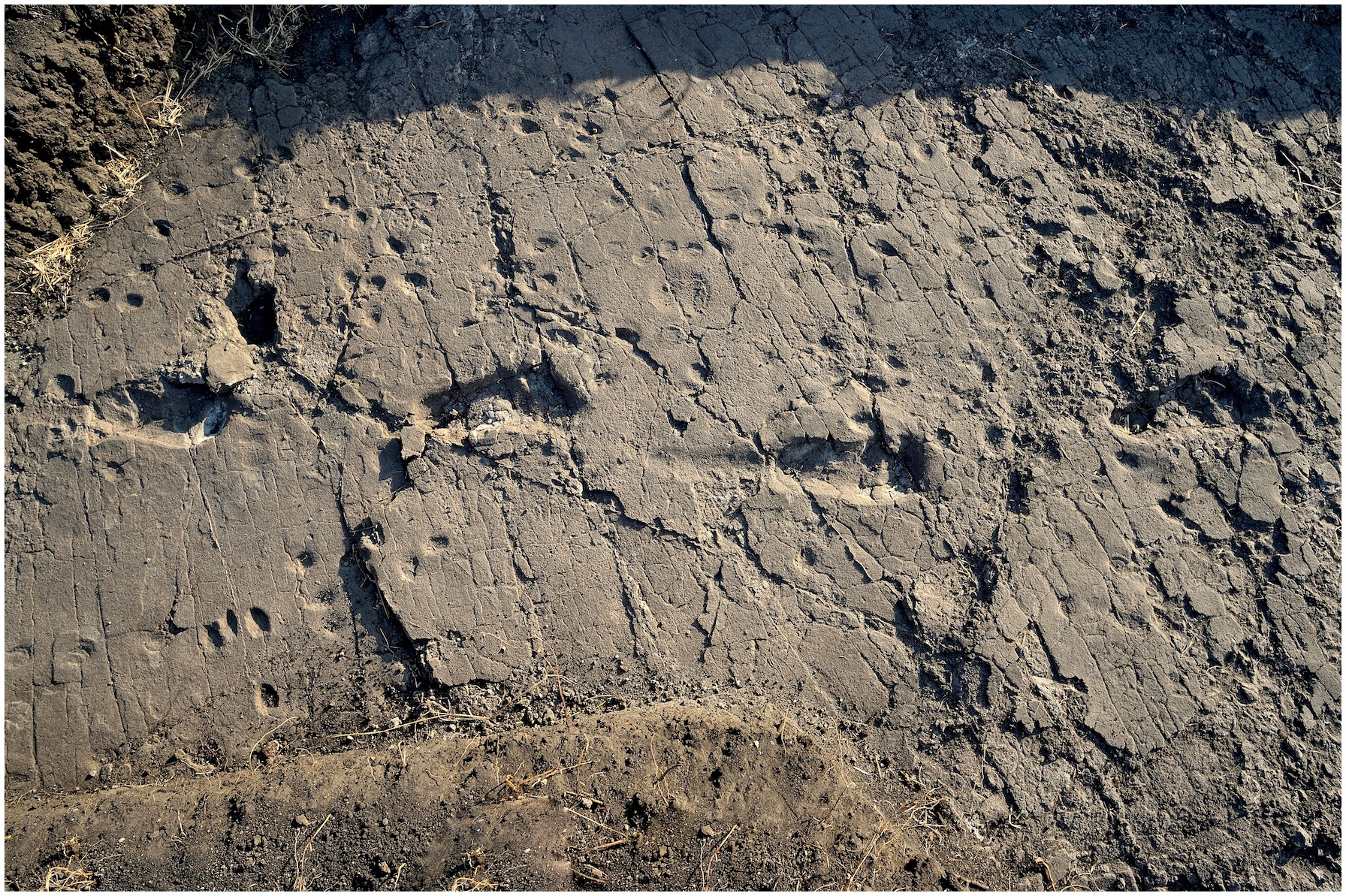 Huellas de 'Australopithecus afarensis' (Tanzania)