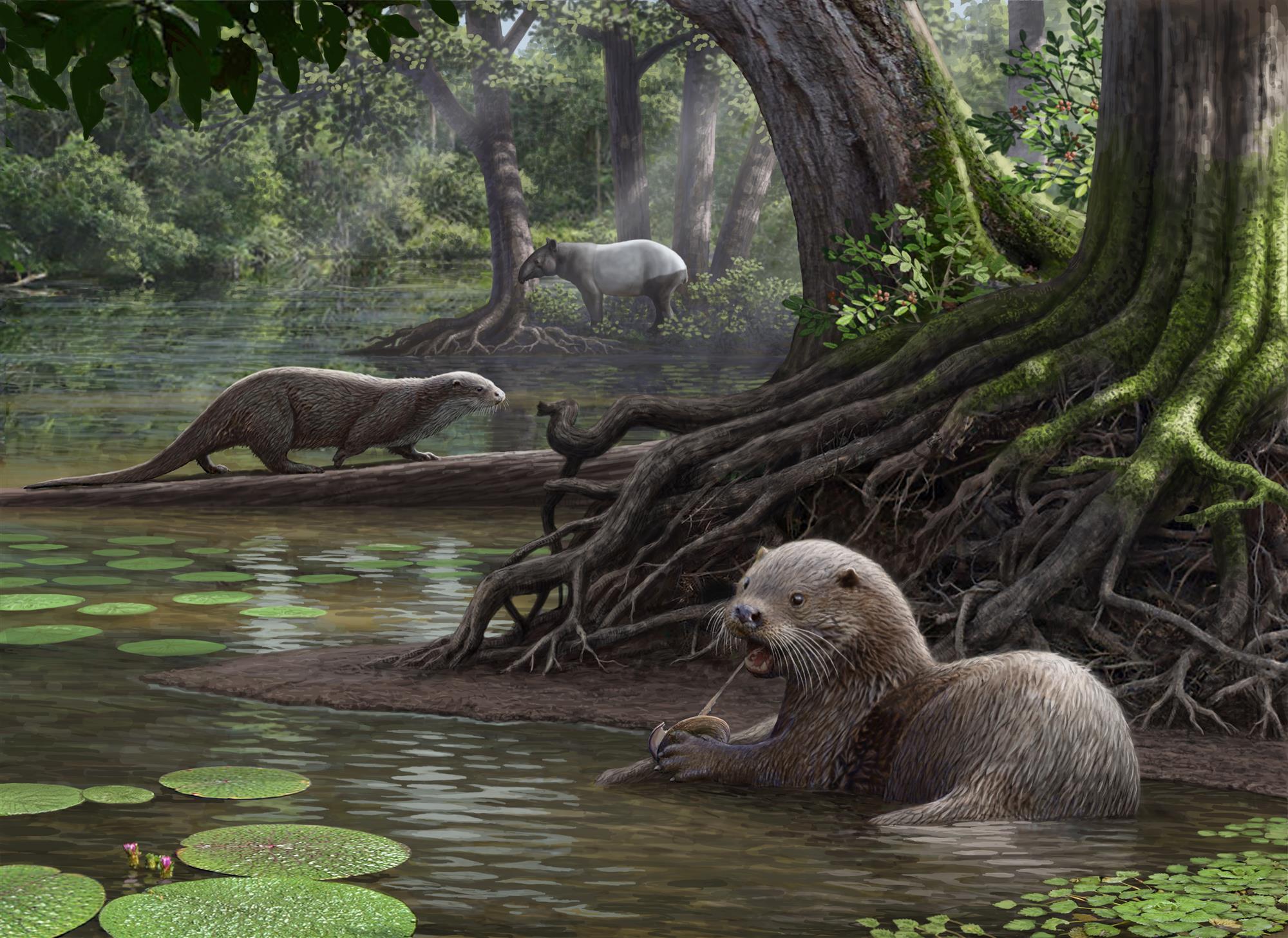 Hallan los restos fosilizados de una nutria que tenía el tamaño de un lobo