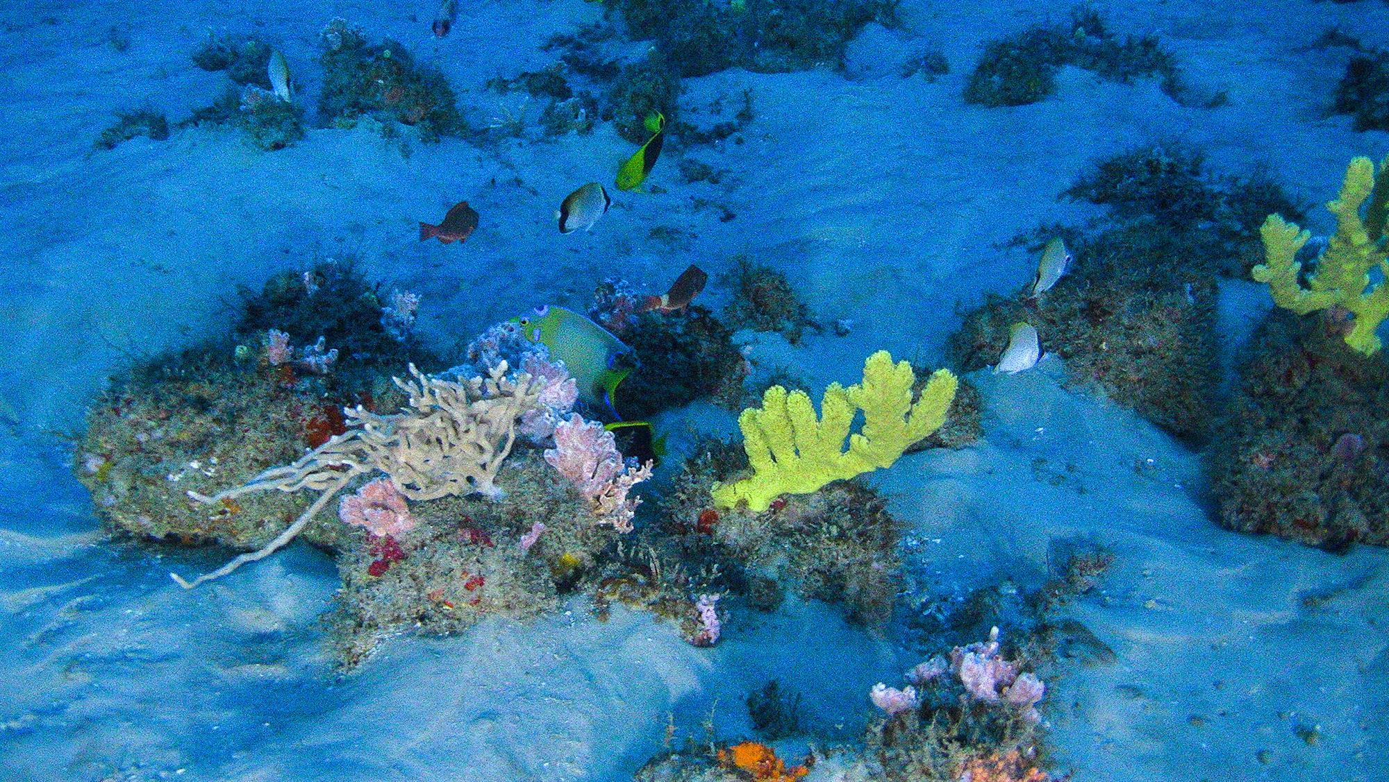 Primeras imágenes del arrecife de coral