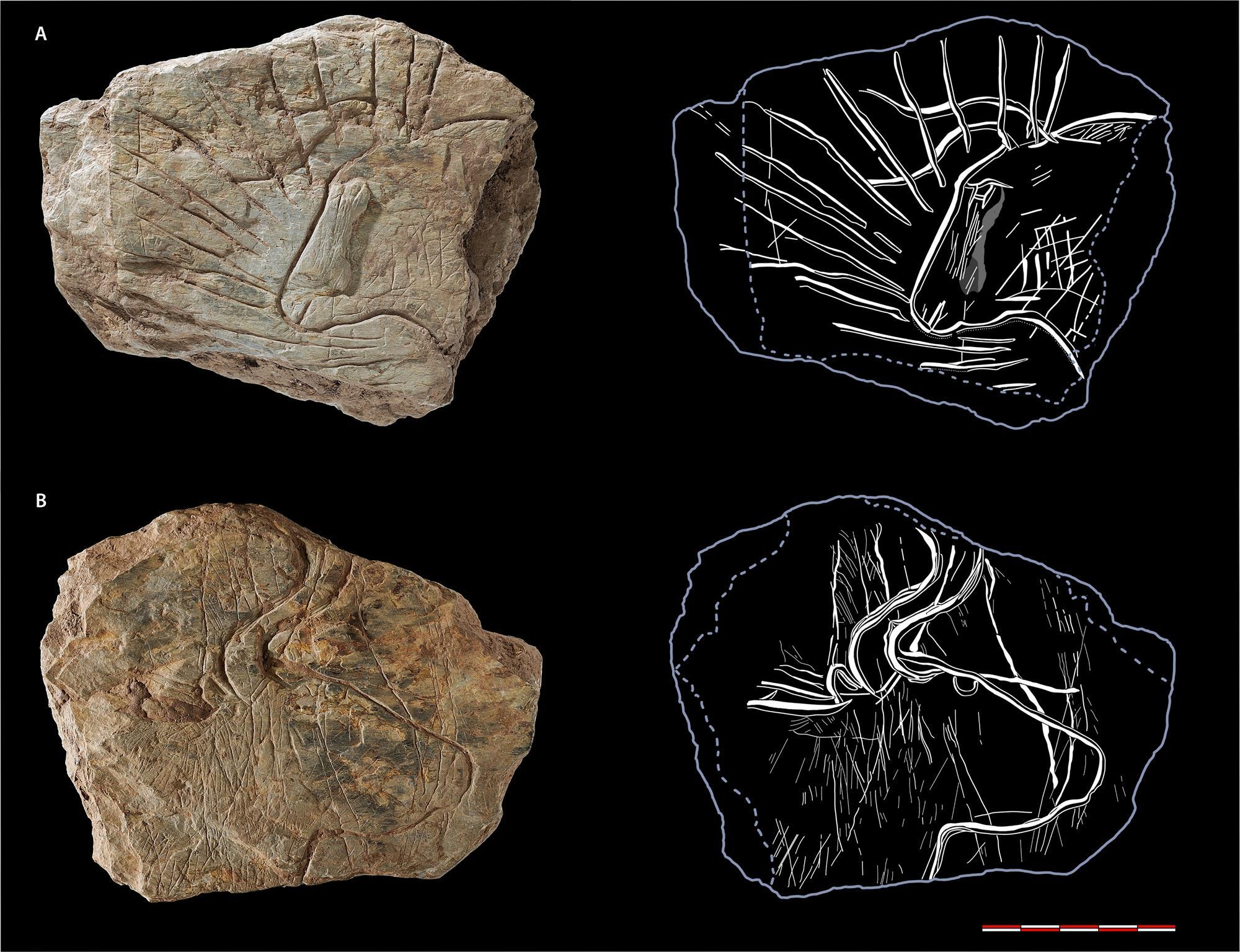 Un toro resplandeciente y otros maravillosos grabados prehistóricos aparecen en Francia