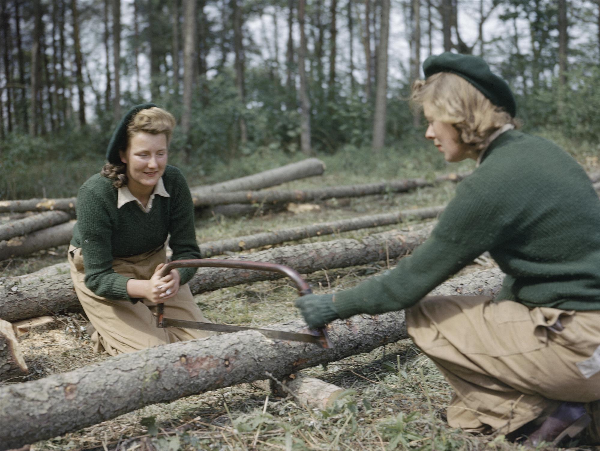 Serrando un tronco