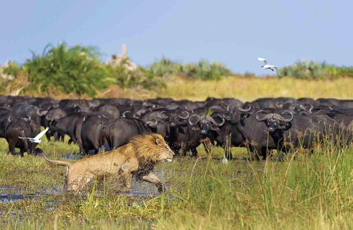 Botsuana, naturaleza en estado puro