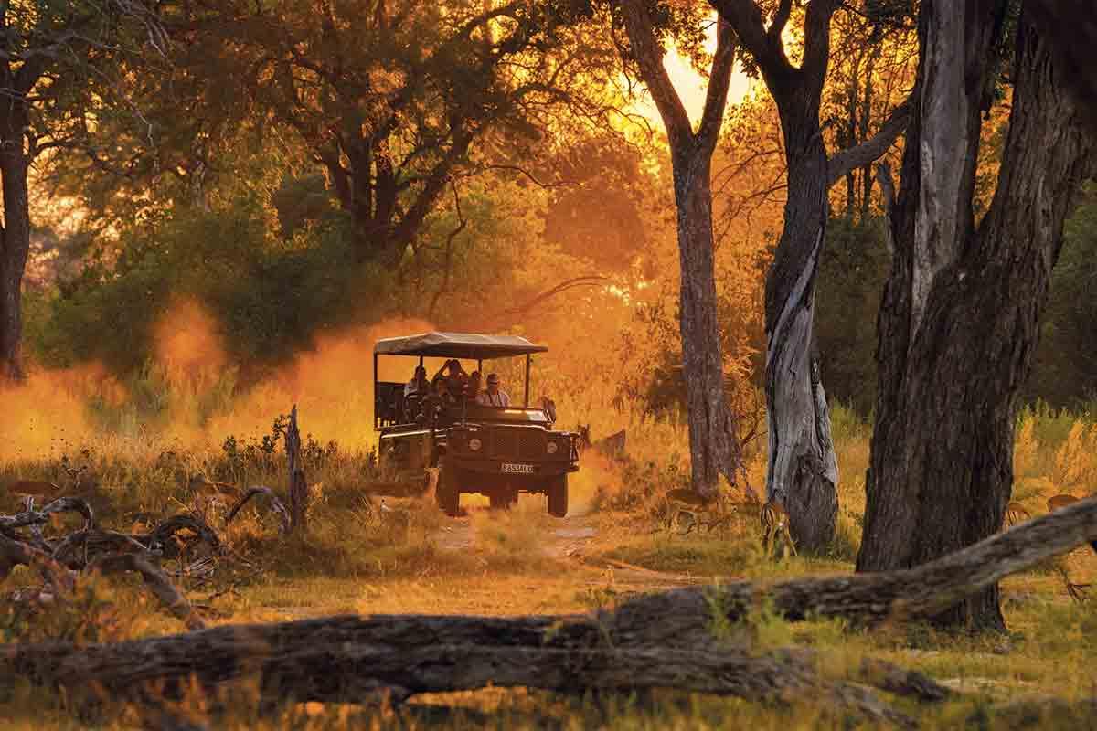 Safaris por tierra
