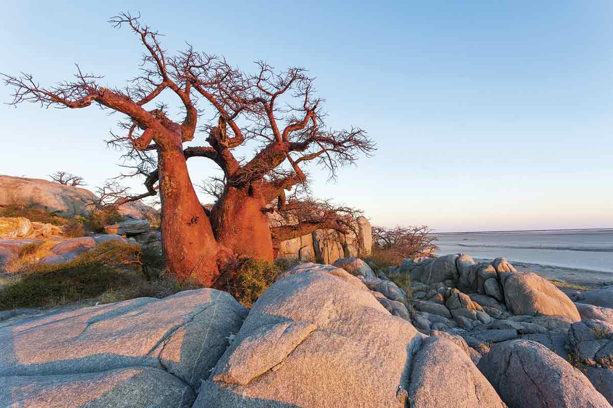 DDE-AF05-PSO0300. Parque Nacional Makgadikgadi Pans, un refugio de fauna y flora