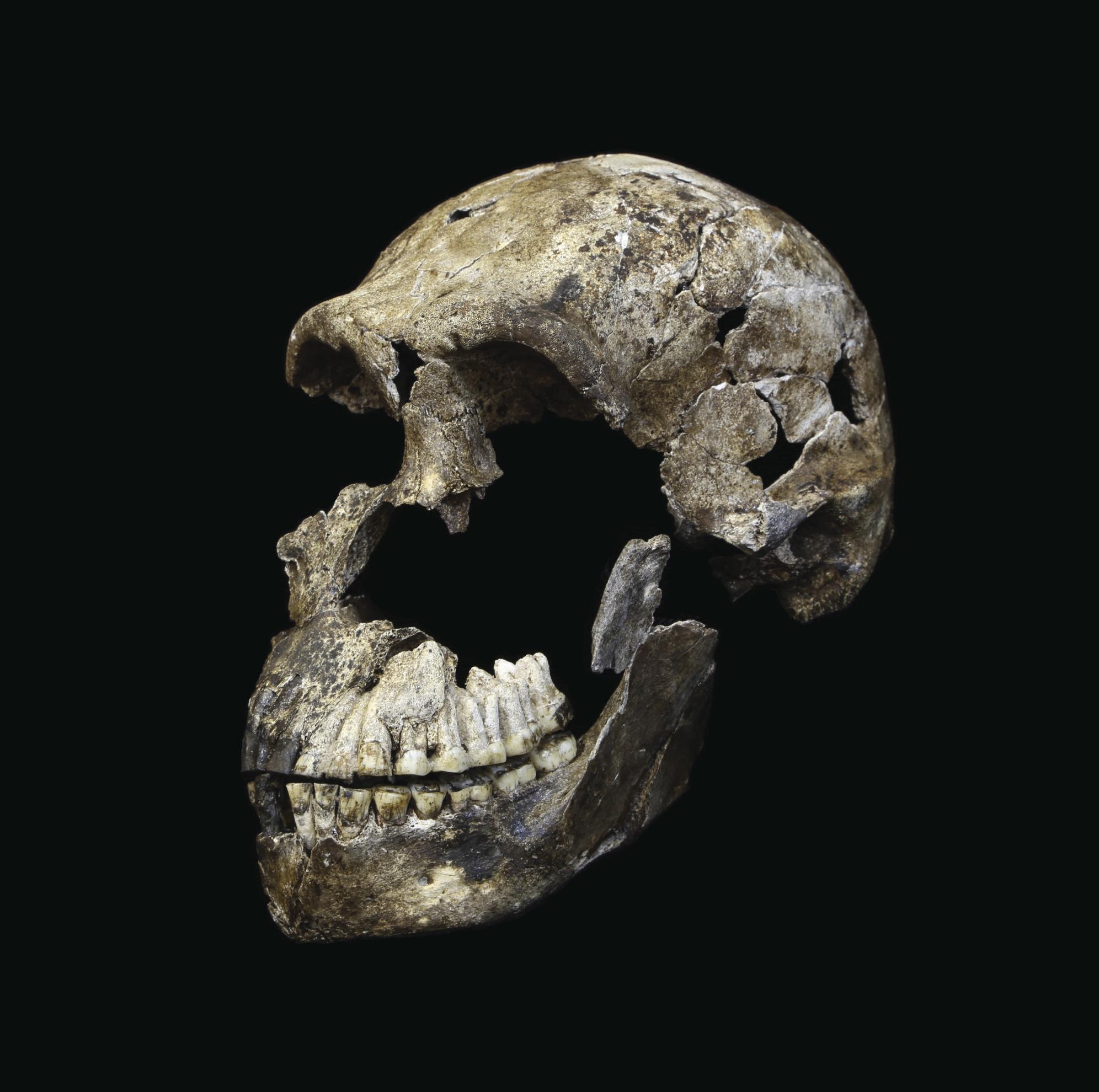 Nuevos y sorprendentes hallazgos relacionados con el 'Homo naledi'