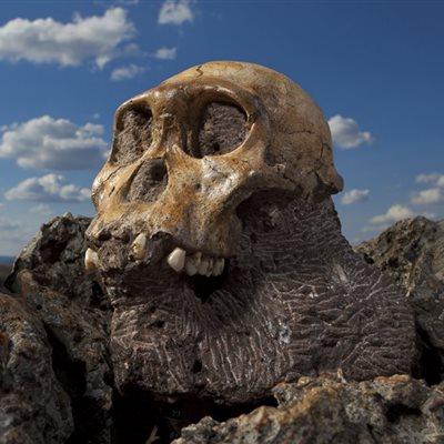 ¿Cuánto sabes sobre la evolución humana?