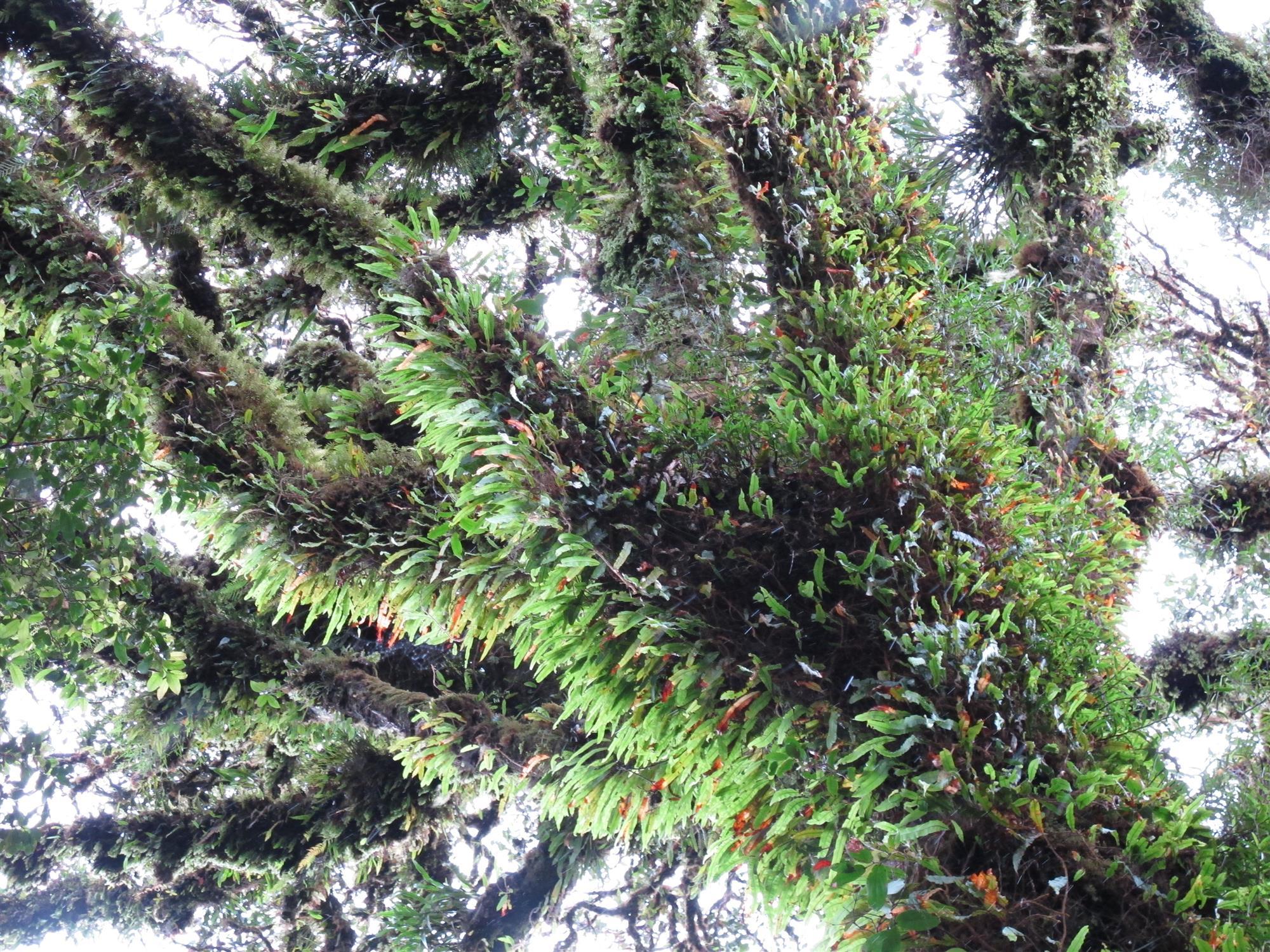 En Las Cumbres De Papua Nueva Guinea Crecen Arboles Imponentes - Arboles-pequeos