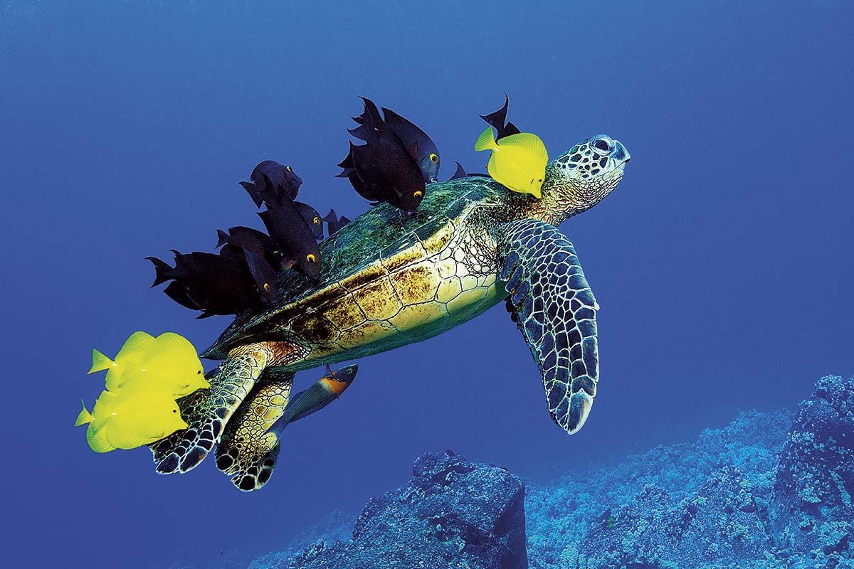 F60-530237. El océano como fuente de inspiración y vida