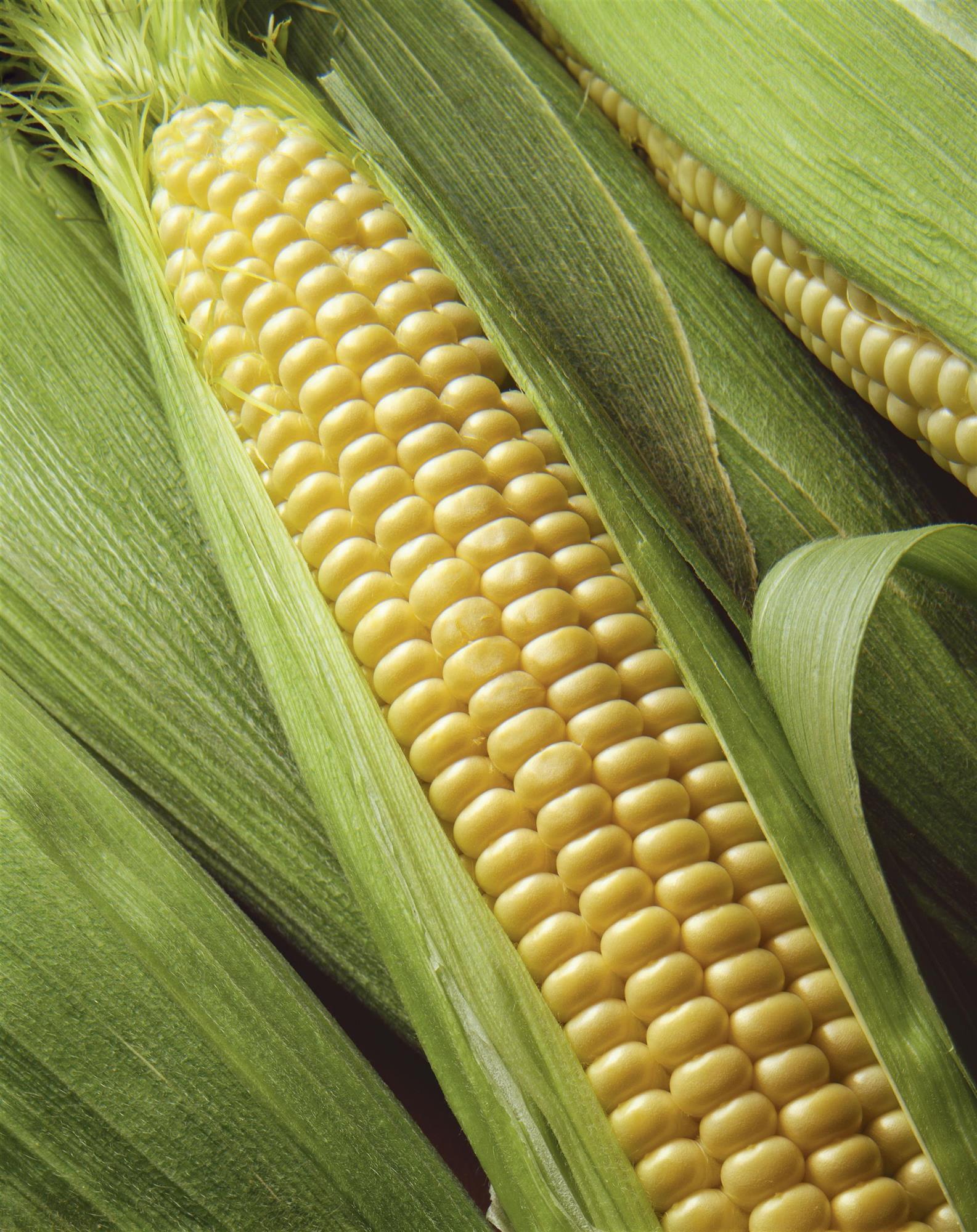 GettyImages-98356194. Cereales y otras hierbas en el motor
