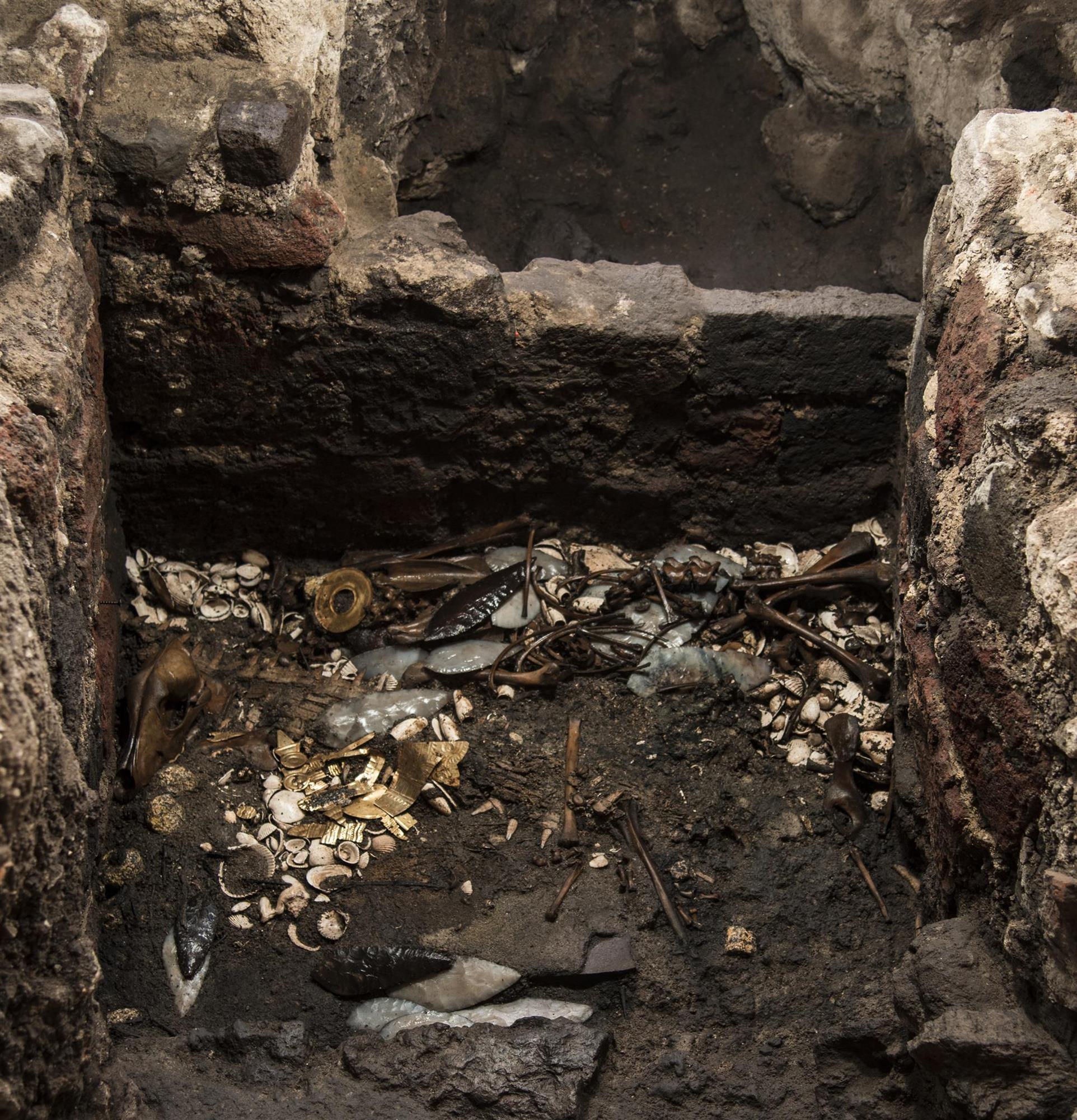 Un lobo sacrificado hace 500 años por los aztecas y adornado con piezas de oro purísimo
