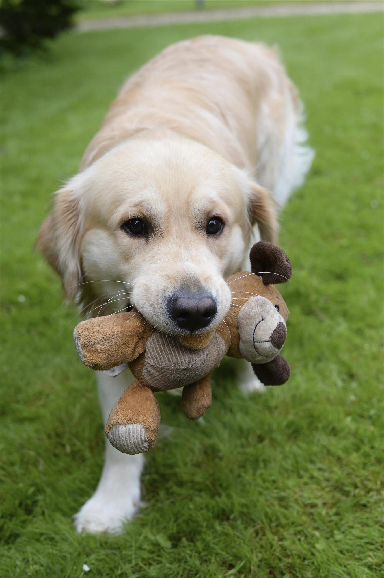Resultado de imagen para perro