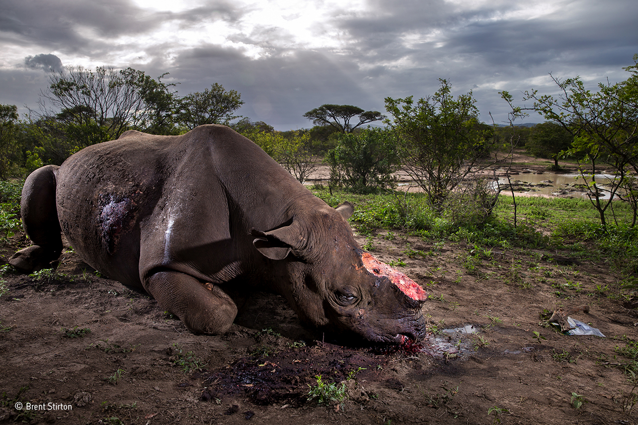 83-1280px-Brent-Stirton. Memorial to a species