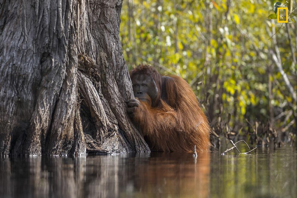Las mejores fotografías de naturaleza National Geographic 2017