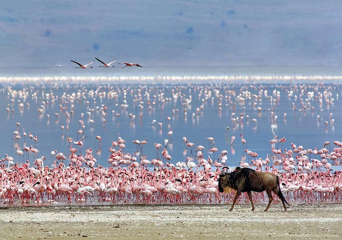 Tanzania, el gran safari africano