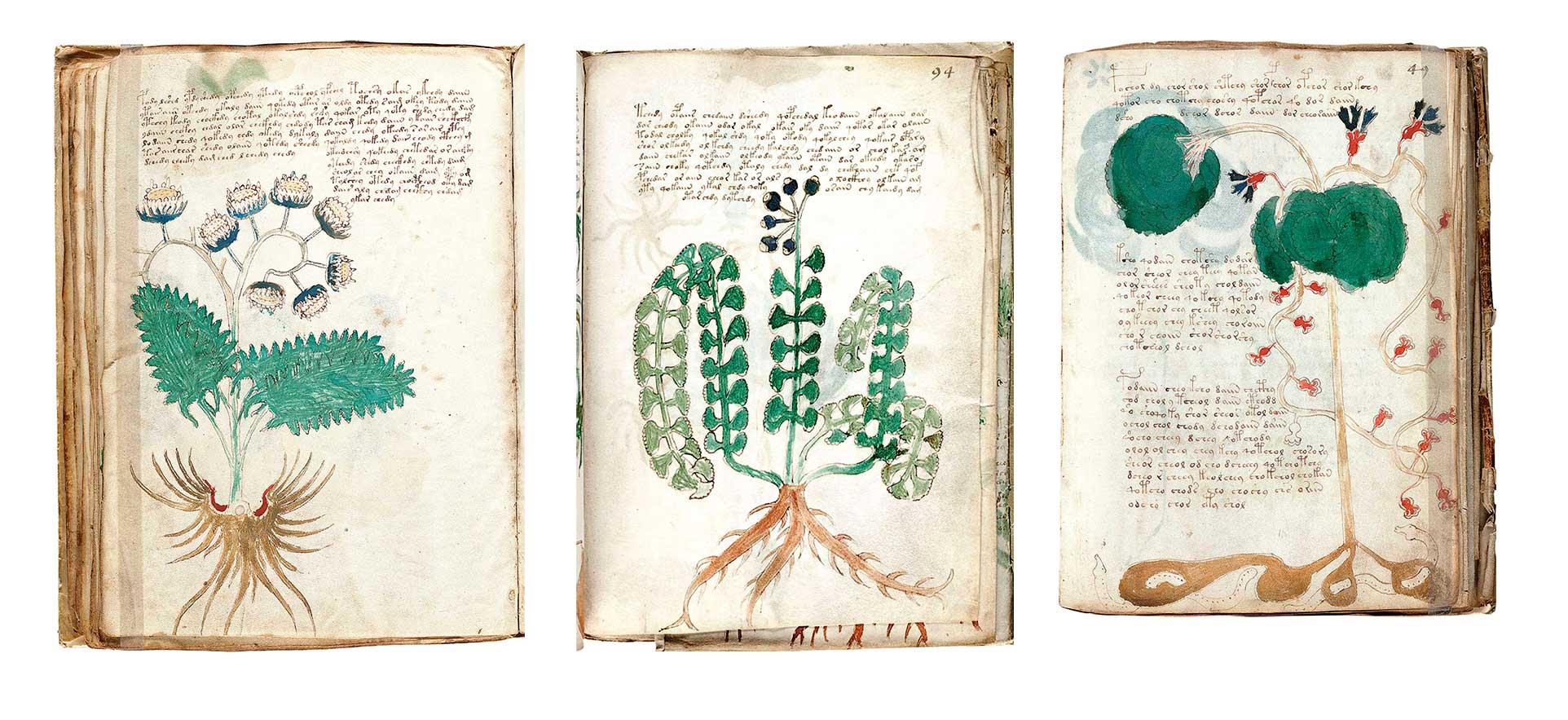 codice-voynich-paginas-imaginarias. Plantas imaginarias