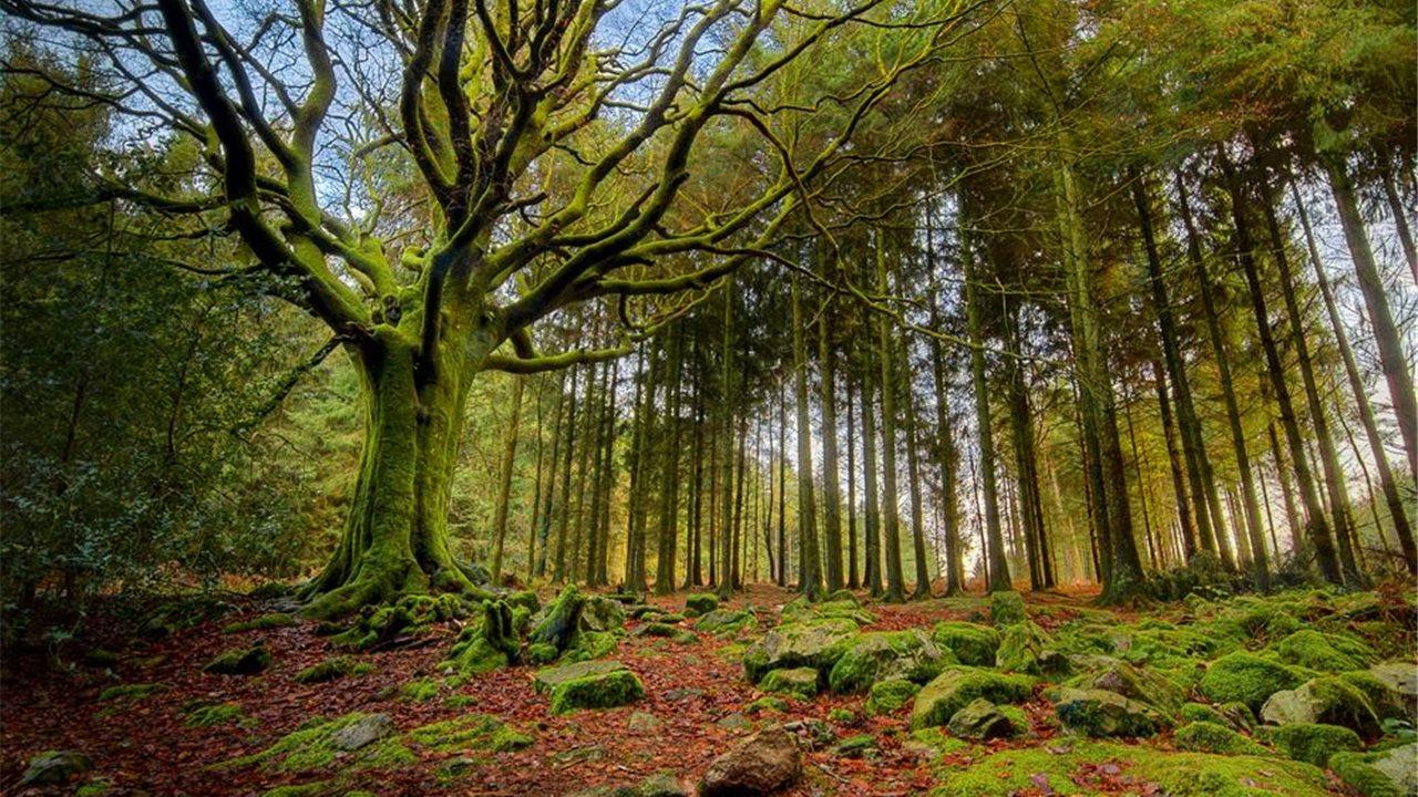 Los bosques m s bellos del mundo for Lo espejo 0450 el bosque