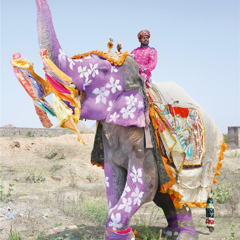 Elefantes De La India El Desfile De Los Elefantes Pintados