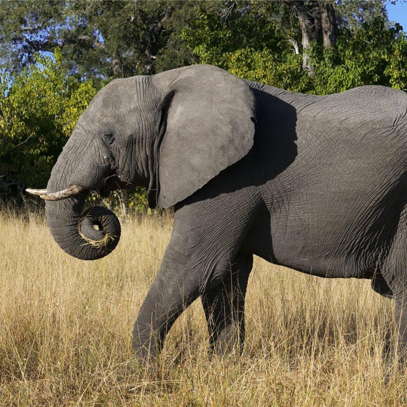 Reportajes y fotografías de Elefantes en National Geographic