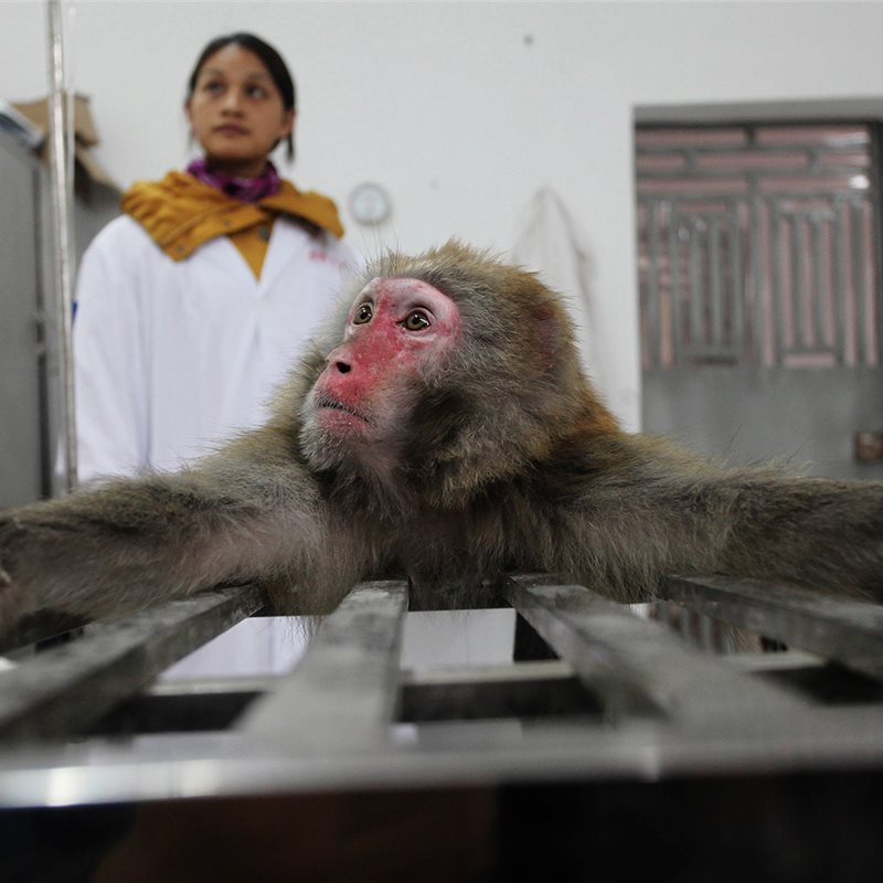 """Experimental monkeys made in China"""