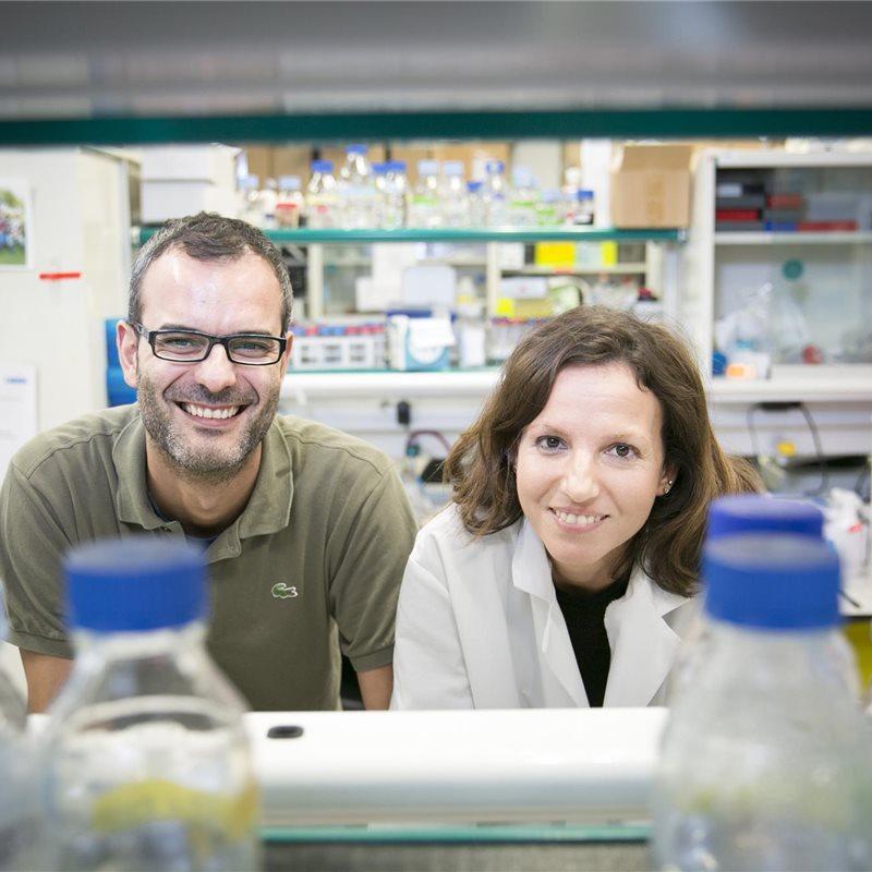 Descubierta una proteína clave en la metástasis del cáncer