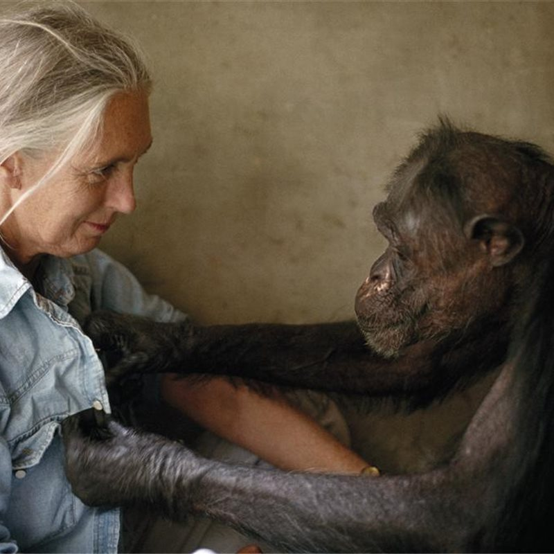 Jane Goodall felicita a National Geographic por sus 125 años