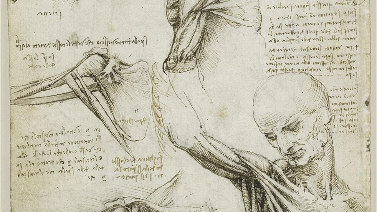 La anatomía humana según Leonardo da Vinci