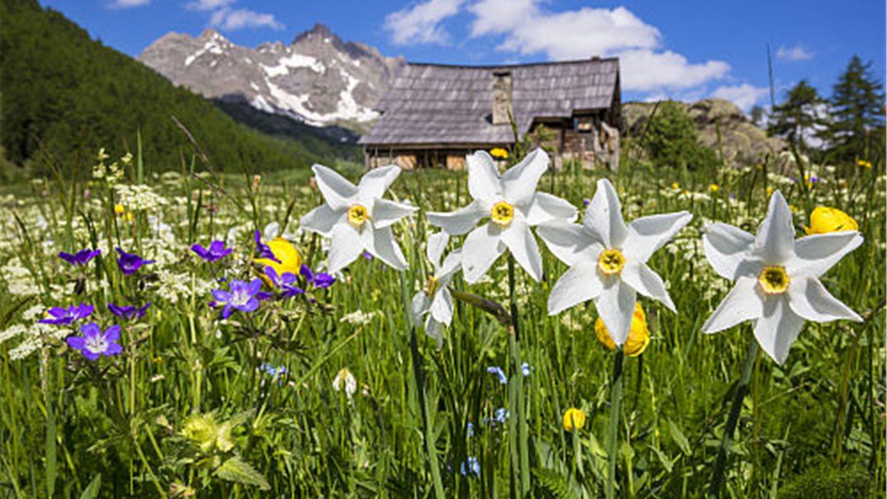 Imagenes De Paisajes De Primavera: 10 Preciosos Paisajes Primaverales De Todo El Mundo