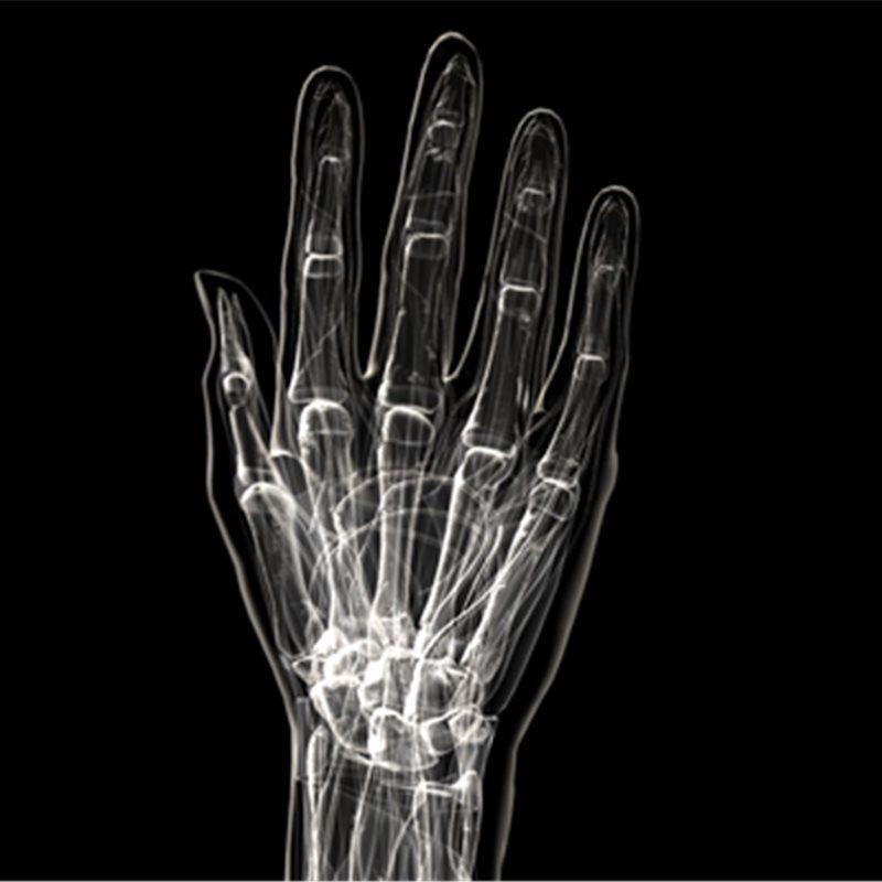 La evolución de las manos, la mano que tenemos en común