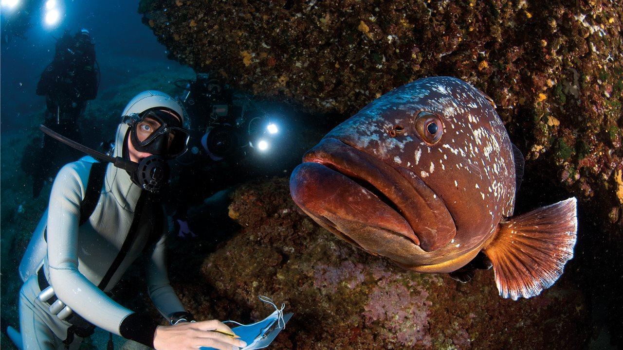 Viaje al fondo del mediterr neo - Fotos de peces del mediterraneo ...