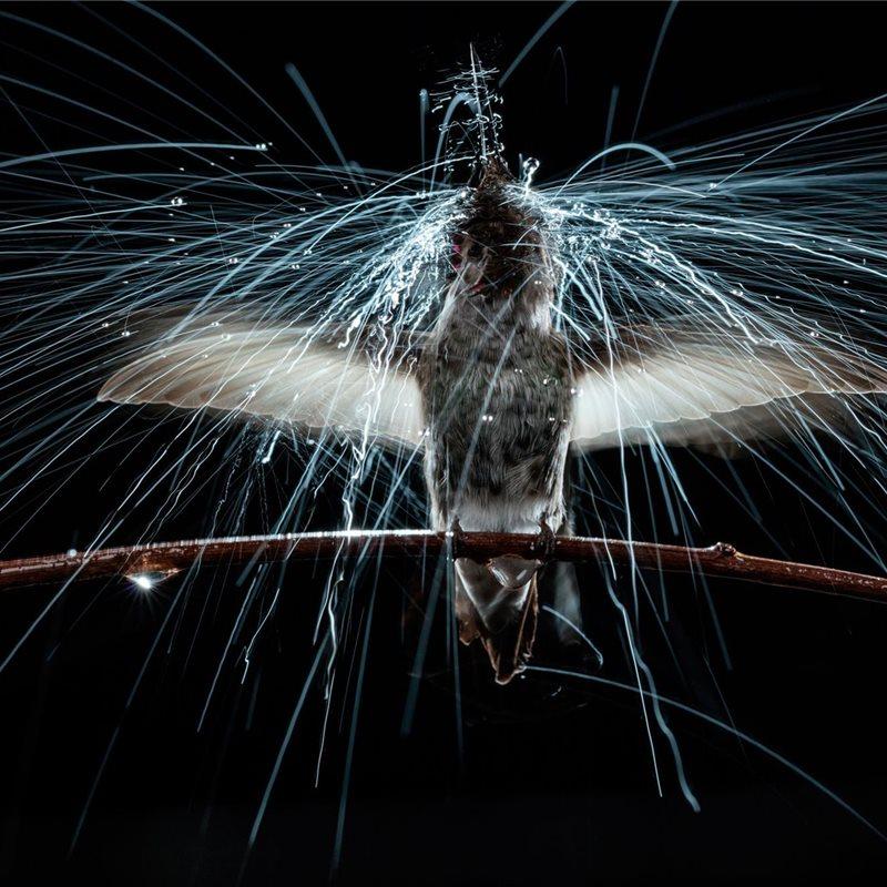 Colibríes, las aves más pequeñas del mundo