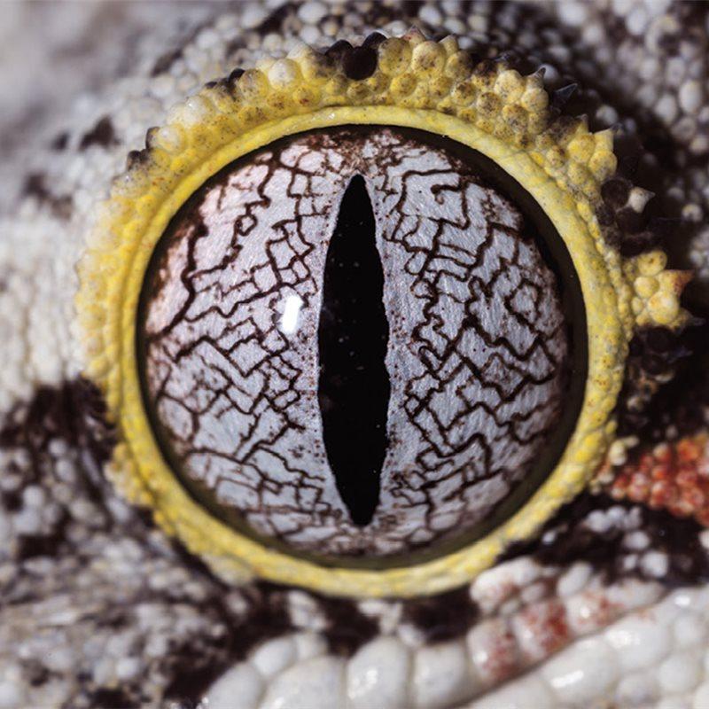 ¿A qué animal pertenecen estos ojos?