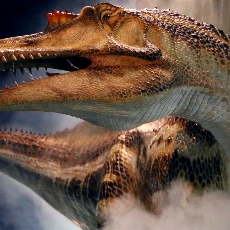 Spinosaurus, dinosaurio carnívoro más grande y temido del planeta