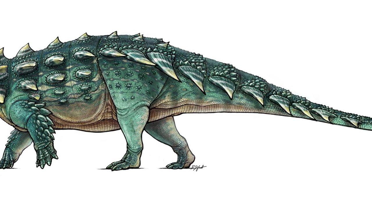 Asombrosos fósiles de dinosaurio acorazado con la cola en ...