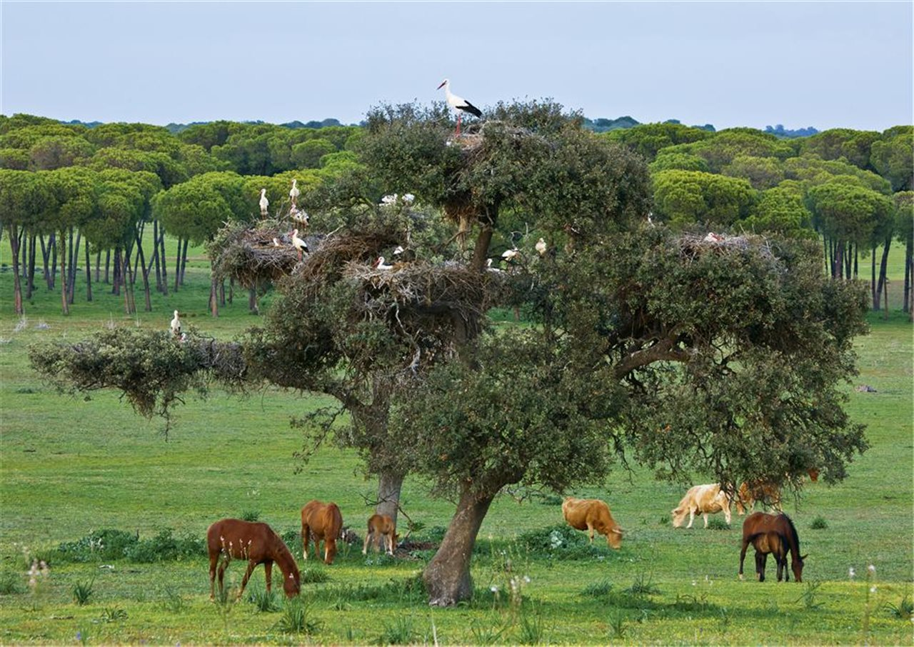 Maravillas naturales en el Parque Nacional de Doñana.