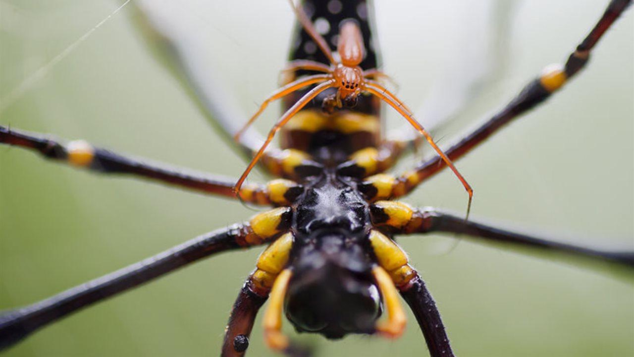 Diferencias entre machos y hembras en animales de la naturaleza