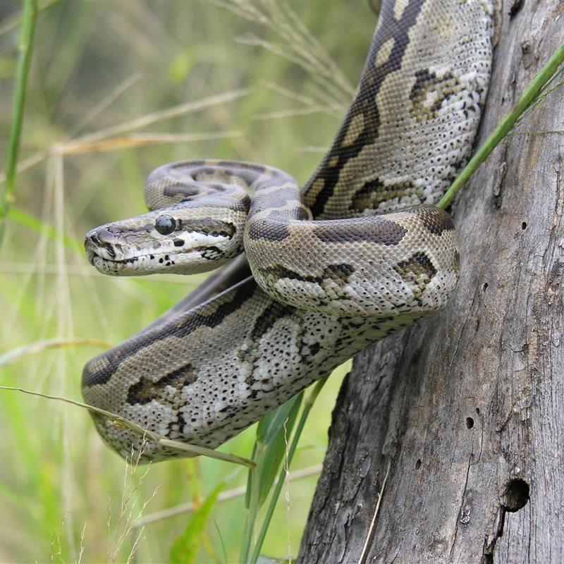 Reportajes y fotografías de Serpientes en National Geographic