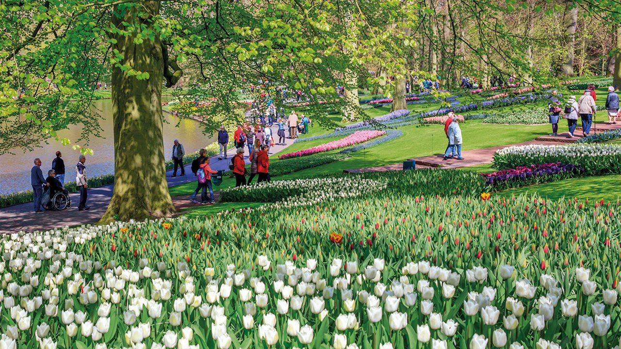 Keukenhof el jard n m s bello est en holanda y dura s lo 8 semanas - Jardines de tulipanes en holanda ...
