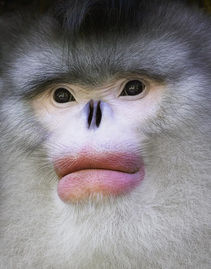 143 Fotos De Primates