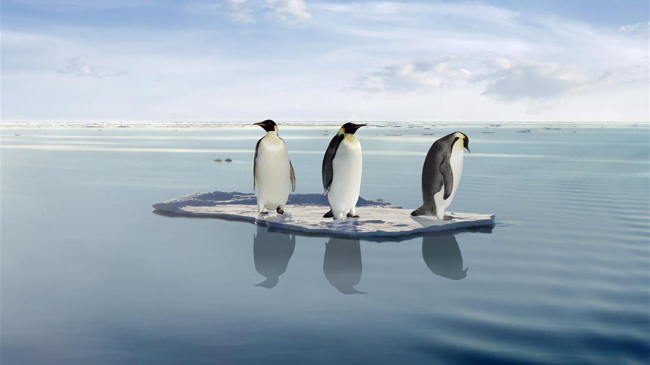 Los Peligros Que Acechan A Los Pingüinos