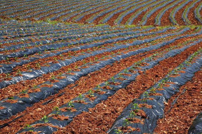 plastico agricultura. Otros usos