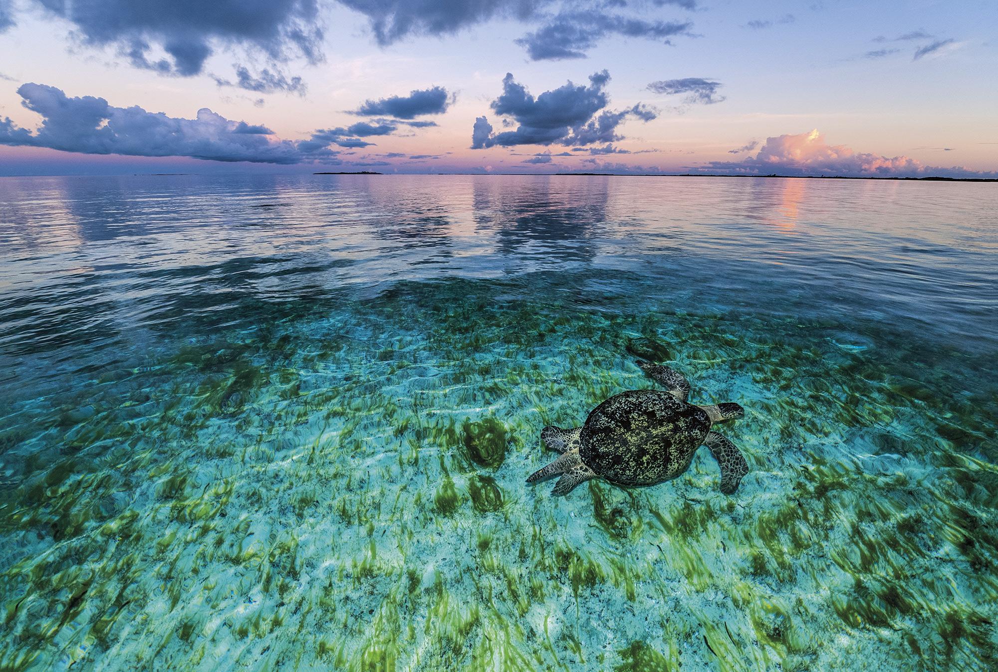 tortuga-aldabra-seychelles. Santuario oceánico