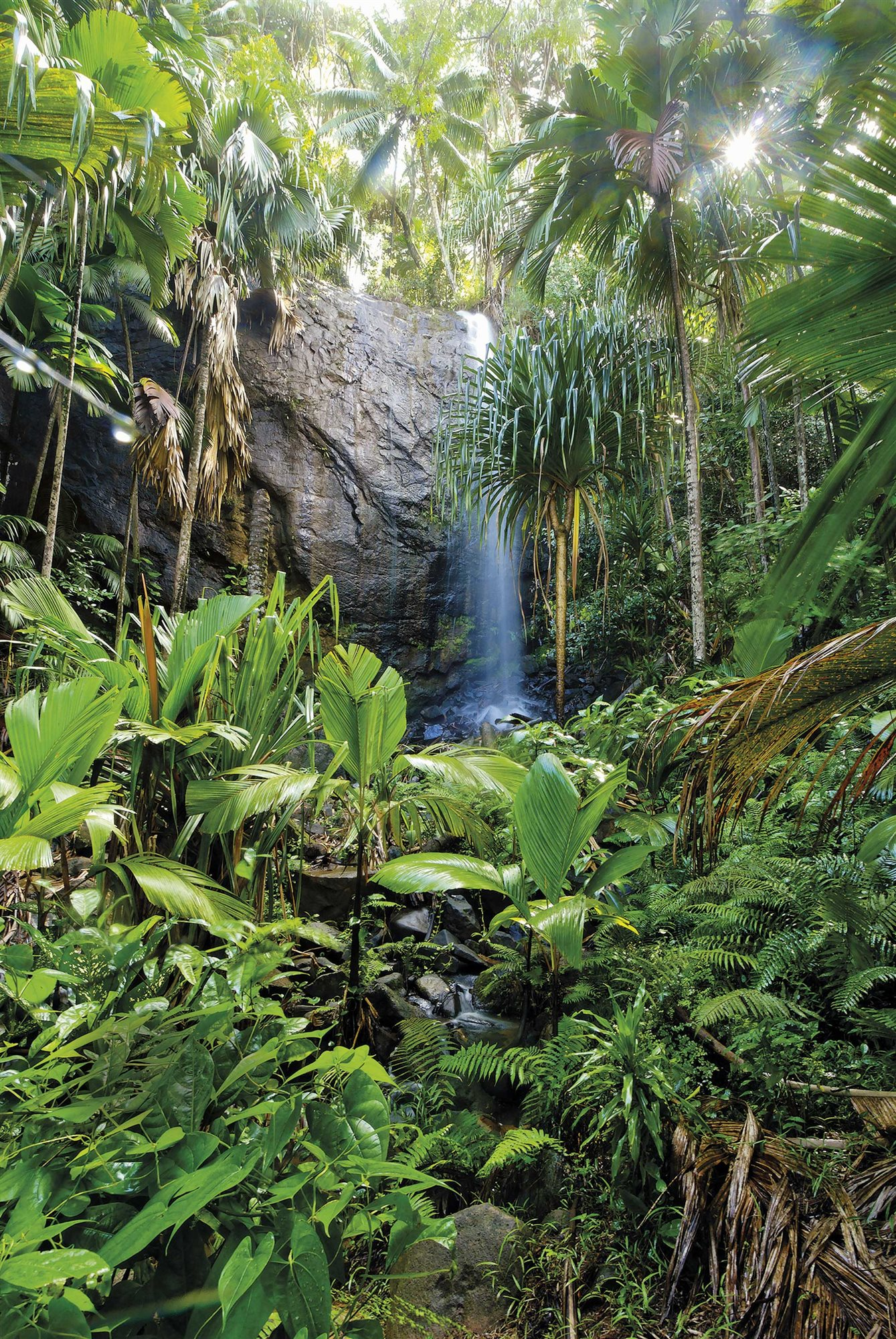 valle-de-mai-praslin-seychelles. Praslin