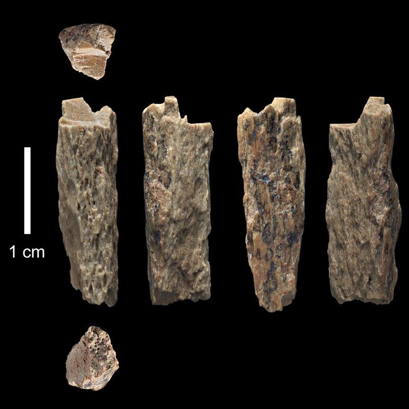 Denny era de sexo femenino y tenía una madre neandertal y un padre denisovano