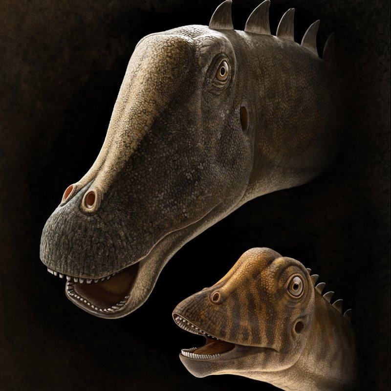 ¿Cómo vivían los diplodocus?