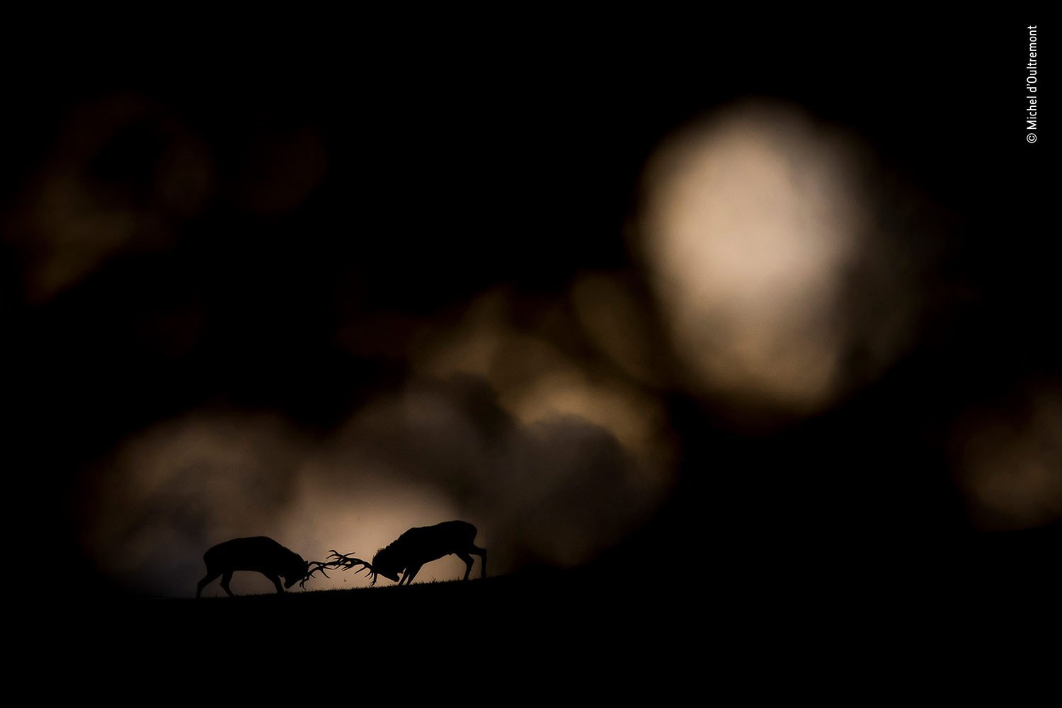 © Michel d'Oultremont - Wildlife Photographer of the Year. La noche del oso