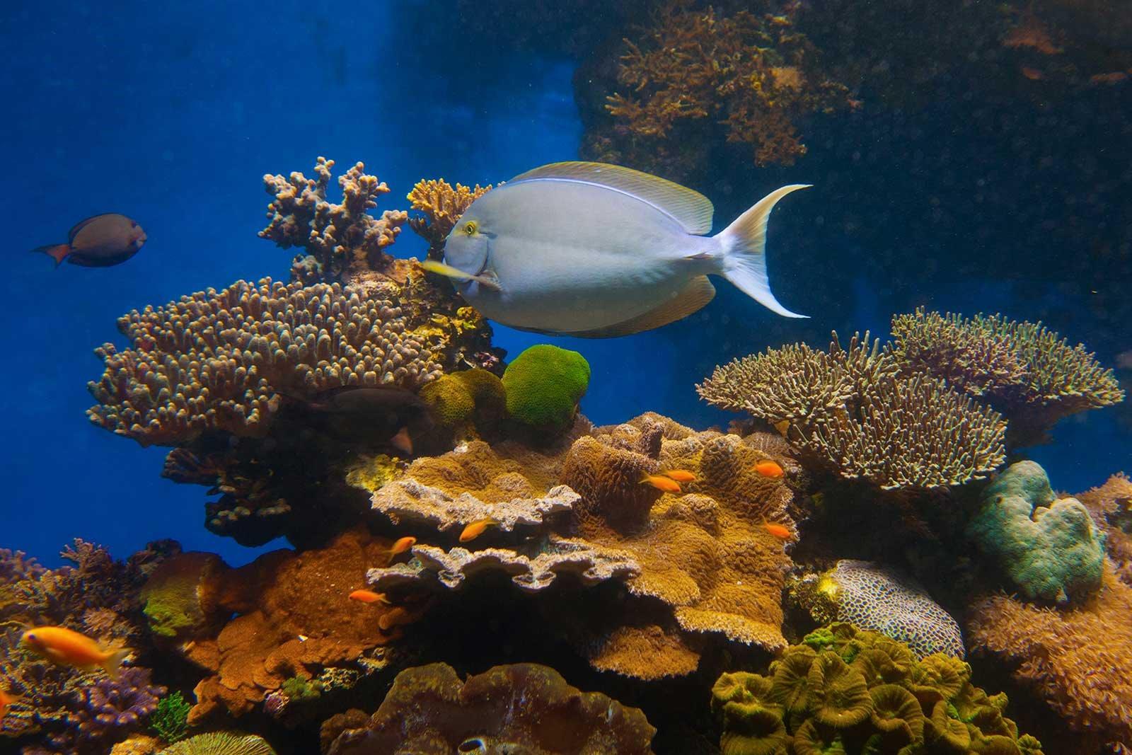 Reserva de coral de Eilat