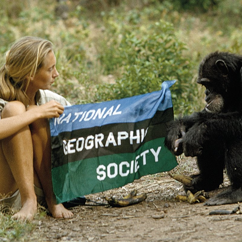 jane goodall 1 national geographic society