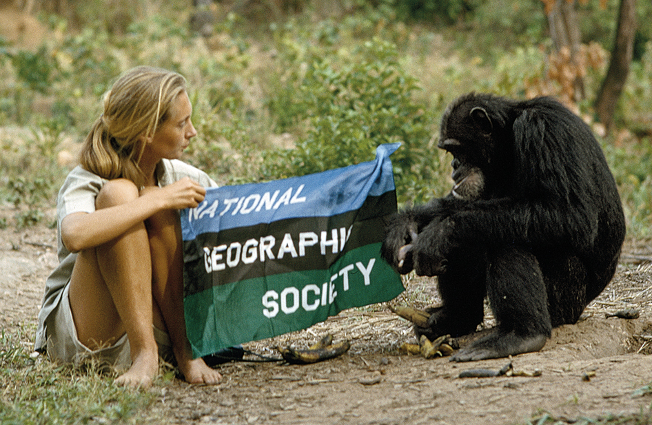 Jane Goodall con una bandera de la National Geographic Society