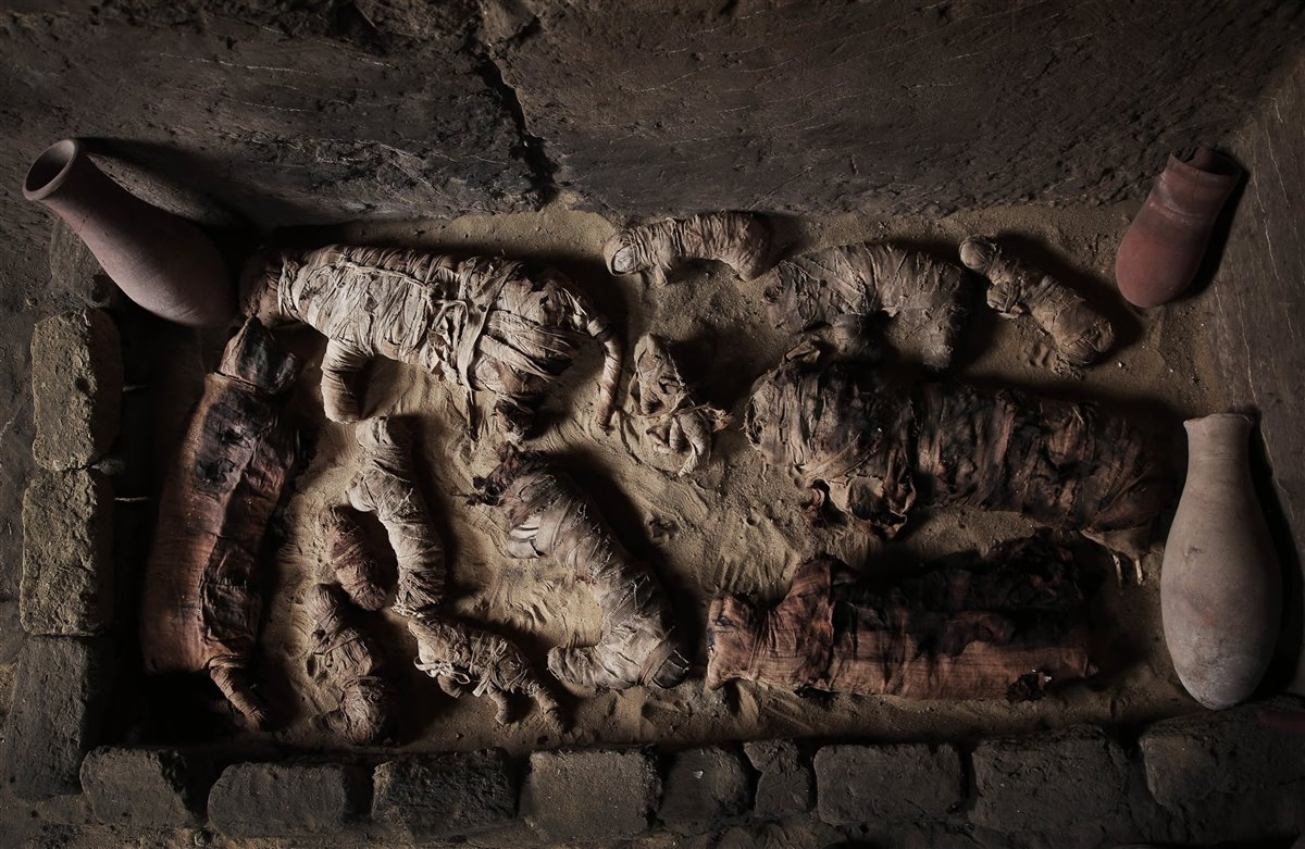 Momias de gatos del periodo tardío de Egipto, descubiertas en el interior de una tumba del Imperio Nuevo. Foto: Nariman El-Mofty / AP Photo / Gtres